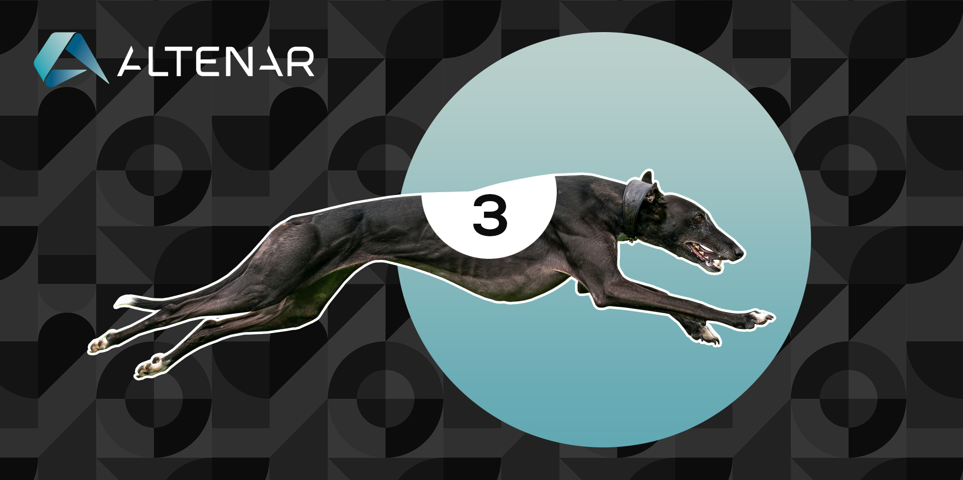 Greyhound Racing Software — Is it Necessary?
